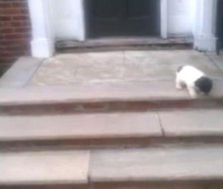 階段が怖い子犬…まさかの方法02