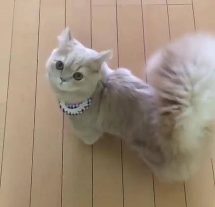 リスのしっぽをもつ猫01