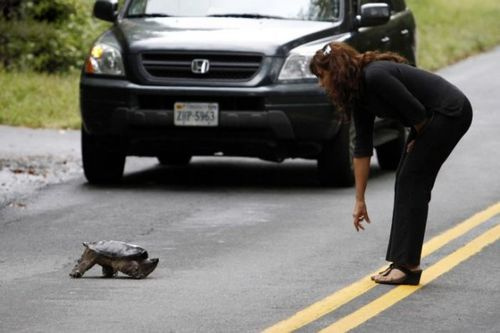 道路を渡る動物20