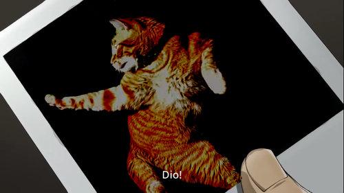 最高のポーズを決める猫13