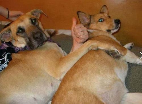 犬の決定的写真12
