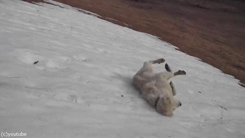 雪に大喜びの犬03