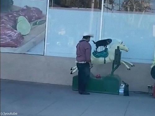 馬の遊具と犬01