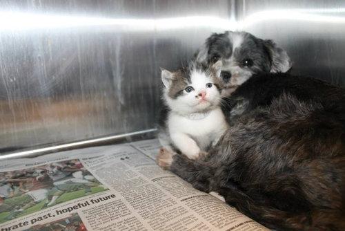 子猫を守る捨て犬01