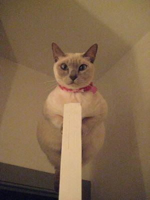 ドアの上の猫01