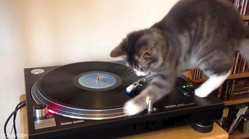 猫にレコードプレイヤーを与えてみたら02