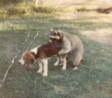 うちの猟犬が警戒態勢に入った02