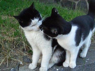 愛し合い猫15