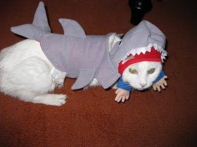 サメ猫06