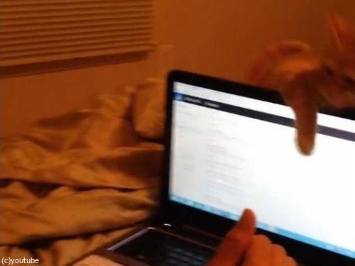 ノートパソコンと子猫05