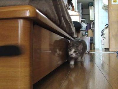 だるまさんがころんだ猫その2
