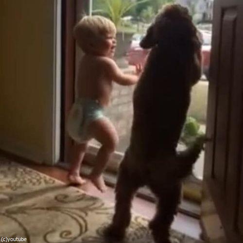 赤ちゃん&犬「パパが帰ってきた!」03
