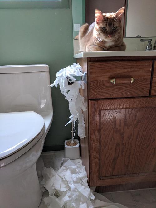 料理の邪魔する猫をトイレに閉じ込めておいた01