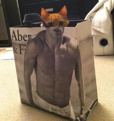 マッチョな紙袋に猫01