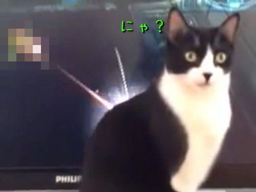 無敵の猫00