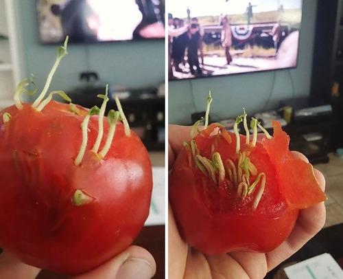 発芽した野菜や果物10