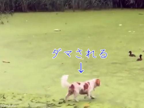 ダマされてしまった犬00