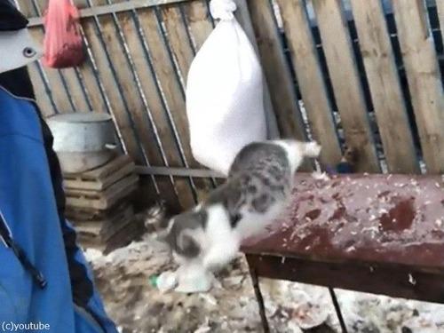 飼い主さんの肩に跳び乗ろうとした猫03