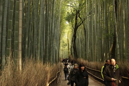 嵐山の竹林02