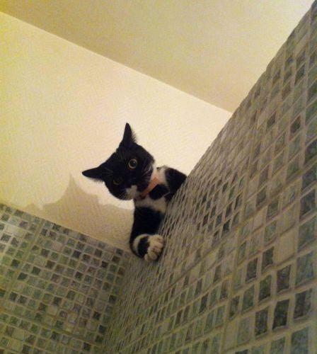 猫は見ている12