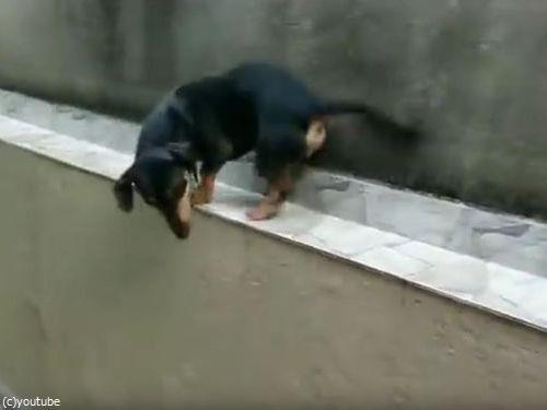 「この犬がどうやって窮地を脱出するかわかる?」06