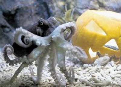 タコとかぼちゃ01