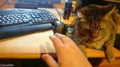 うちの猫のせいでパソコンが使えない01