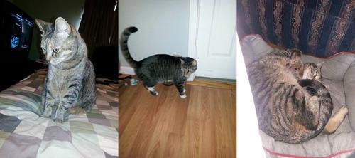 うちには痩せた猫と太った猫がいる02