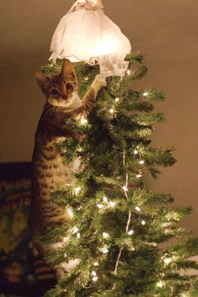 クリスマスとペット11