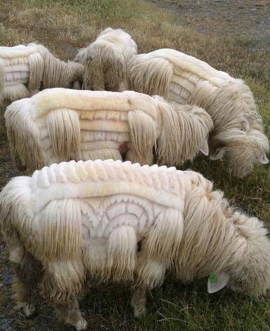 羊飼いの楽しみ07
