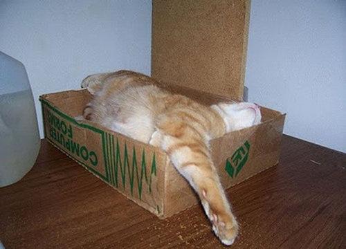 猫の寝方06