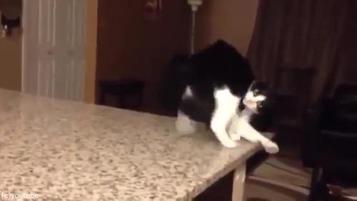 「この猫に…何が起きてるの!」07