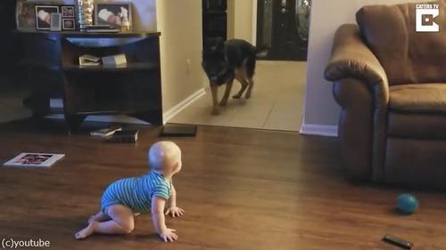 追いかけっこする赤ちゃんと犬01