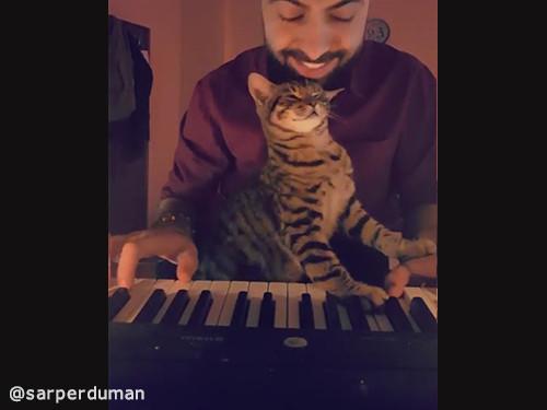 飼い主さんの演奏にメロメロな猫04