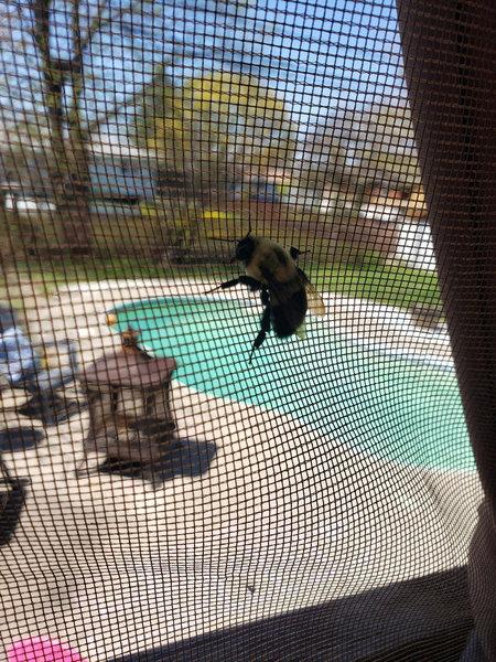 「ミツバチの世界にもおデブさんがいた」03