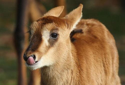 動物の赤ちゃん02