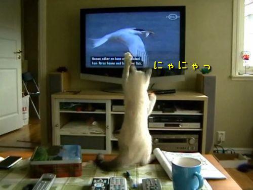 テレビの鳥を捕まえようとする猫