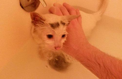 かわいそうな子猫を見つけた10