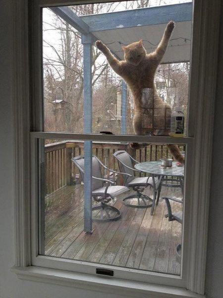 猫の謎の行動20