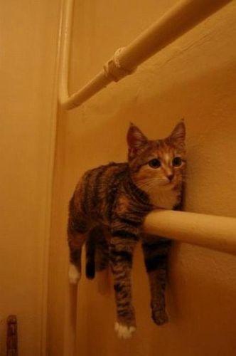 猫タオル01