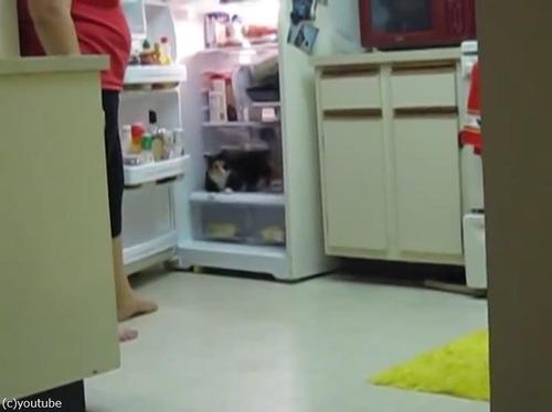猫、冷蔵庫にまっしぐら03