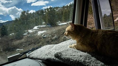 トラック運転手の猫が行方不明も意外な再会02