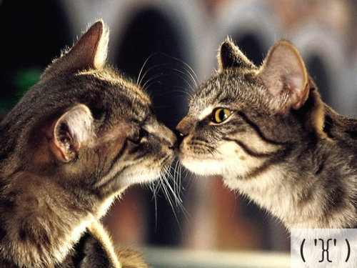 猫の顔文字13