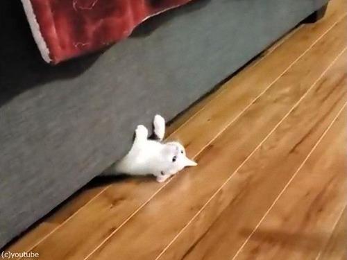 猫、逆さにスライディング01