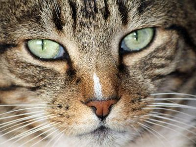 猫の画像 p1_3