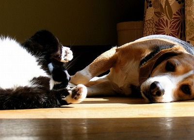 邪魔する犬と猫16