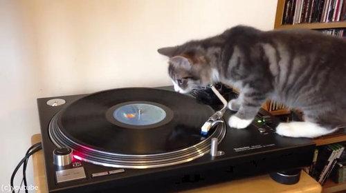 猫にレコードプレイヤーを与えてみたら01