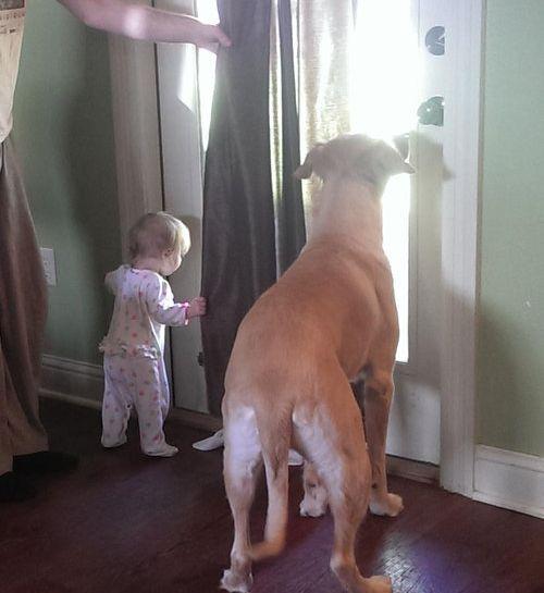 犬と娘の3年後03