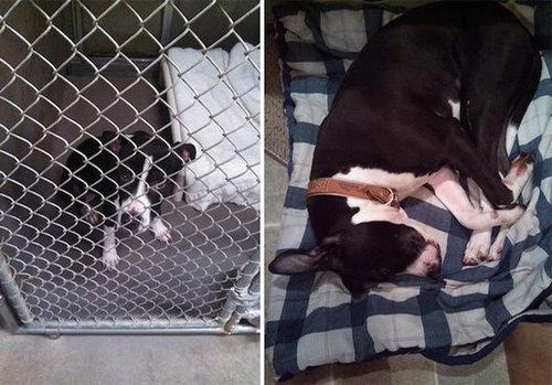 拾われた犬のビフォー&アフター18
