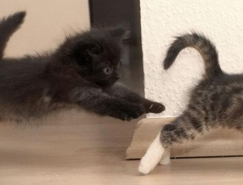 03不意打ちする猫たち